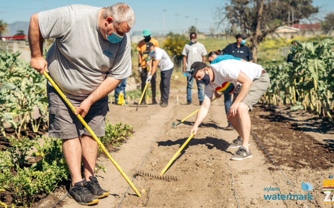 Bellville's first urban food garden spring harvest brings new hope and growth